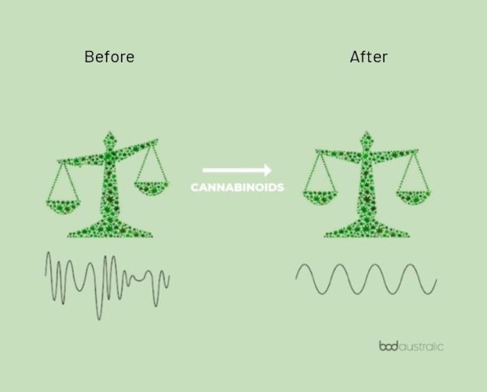 Endocannabinoid scale balancing the body